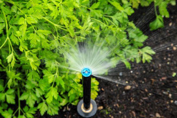 Premium Irrigations se positionne dans les systèmes d'éclairage résidentiels